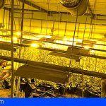 Intervenidas 1.160 plantas de marihuana en naves industriales de Cádiz