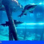 Poema del Mar en Gran Canaria recibe a los tiburones de Siam Park