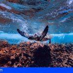 I Campeonato de Fotografía Científica Submarina en La Gomera