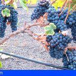 Diez variedades de uva de Gran Canaria, a examen en una cata varietal de especies insulares