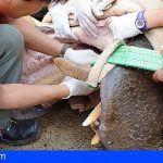 Curso de formación para el bienestar de la fauna salvaje en Oasis Park Fuerteventura
