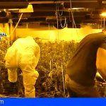 Incautan de 3.858 plantas de marihuana en una nave industrial de Ourense