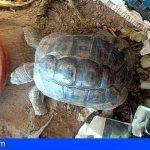 La Policía Autonómica interviene una tortuga y una cotorra que estaban a la venta en Internet