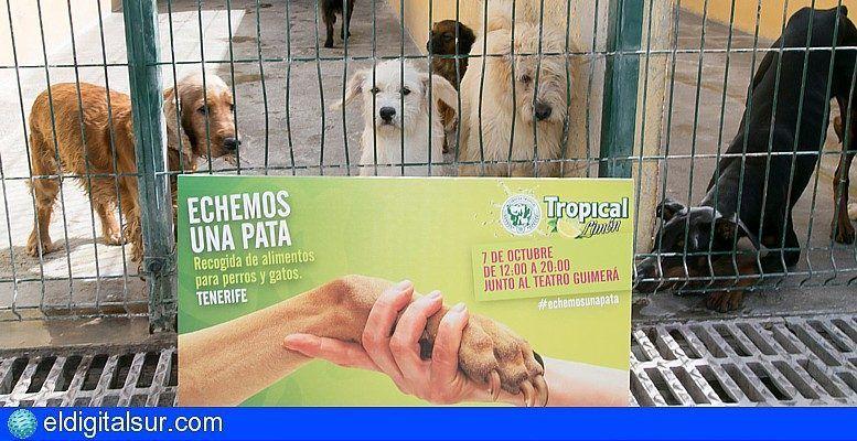 Tropical Limón Lanza La Campaña Echemos Una Pata En Tenerife Contra El Abandono De Animales Eldigitalsur