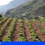 El Cabildo ayuda a los agricultores con 100.000€ para útiles de labranza, riego y tratamientos fitosanitarios