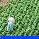 El Gobierno de Canarias concede ayudas a la modernización de explotaciones agrarias por 20,5 millones