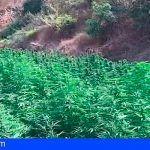 Intervenidas más de 4000 plantas de marihuana en Málaga
