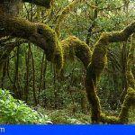 La Gomera celebrará el Día Insular del Árbol el próximo 2 de diciembre