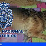 Detienen en La Laguna a un hombre por maltrato animal, uno de los perros muere