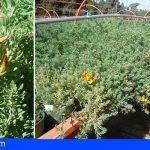 Trabajan en la recuperación de dos especies vegetales endémicas en peligro de extinción