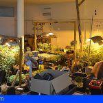 Tenía en Granadilla un laboratorio de cultivo de cannabis sativa