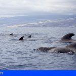 Canarias, Azores y Madeira, tesoros marinos de cetáceos y tortugas