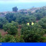 Robaron un total de 12.000 kg de aguacates y 600 kg de plátanos en La Matanza de Acentejo