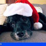 Solo 4 de cada 10 familias se lleva al perro a las celebraciones navideñas