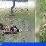 16 involucrados en el uso ilegal de venenos para la caza en 269 actuaciones en 24 provincias