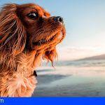 El plazo para presentar aportaciones al Anteproyecto de Ley de Animales en Canarias finaliza el 17 de enero