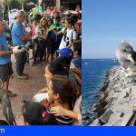 Tenerife | Finaliza la campaña de recogida de pardelas cenicienta con 2.610 ejemplares rescatados