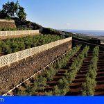 Un aceite de oliva cultivado y producido en Guía de Isora obtiene un importante premio