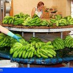 El Gobierno promueve un acuerdo para la reunificación del sector del plátano de Canarias