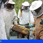 Este año se realizará en Tenerife 11 actividades formativas relacionadas con la apicultura