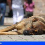 Anualmente se abandonan en Tenerife unos 2.500 perros, el 1 % de los animales censados