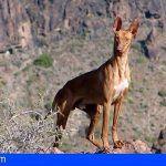 El Cabildo de La Gomera abre dos campos de entrenamientos de caza en la Isla
