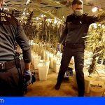 Desmantelan un cultivo de 12.000 plantas de marihuana en Valencia