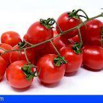 Convocada las ayudas POSEI al tomate canario de exportación por 5,53 millones de euros
