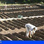 Se abre el plazo para solicitar las subvenciones del sector primario de La Gomera