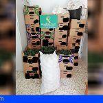 Cuatro investigados por el robo de más de 8.000 kgs de aguacates en fincas agrícolas de La Orotava