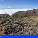 80 personas velarán por la seguridad en la VII Carrera de Montaña de Guía de Isora