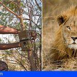 Loro Parque: compromiso con la conservación de los leones