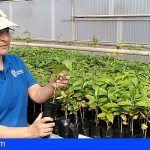 Granja Experimental dona 6.000 plantas de café al año a los agricultores de Gran Canaria