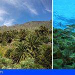 Aprueban el reglamento orgánico de la Reserva de la Biosfera del Macizo de Anaga