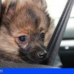 La Mesa del Taxi de Santa Cruz aprueba el transporte de animales domésticos en los vehículos