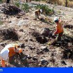 Plantan en La Gomera más de 1.700 ejemplares de especies arbóreas para recuperar zonas forestales