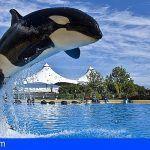 La justicia holandesa respalda a Loro Parque en el caso de orca Morgan