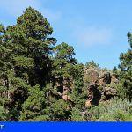 Tenerife | La alerta por incendios prohíbe toda la actividad en zonas forestales