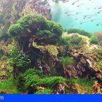 Un acuario paisajístico sin precedentes en Loro Parque
