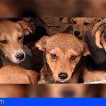 FAADA solicita un delito de maltrato animal por cada uno de los animales víctimas de la pareja de Avinyó