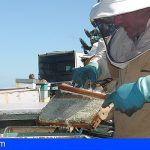 El Cabildo de Tenerife ayudará a los apicultores por las pérdidas causadas por la sequía de 2017