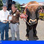 La vaca 'Azucena' y el toro 'Perico' triunfan en el Concurso de Ganado de Gran Canaria
