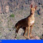 Aprueban el calendario de caza para esta temporada en La Gomera