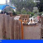 Denunciado el propietario de dos perros peligrosos que intimidaban a vecinos del municipio de Teror