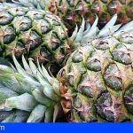 Se han detectado partidas de fruta ilegal, sobre todo piña, en las Islas de Lanzarote, Fuerteventura y La Palma