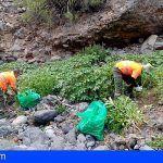 Retiraron en Tenerife más de 251 toneladas de residuos vegetales procedentes de especies invasoras