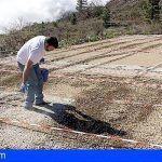 Potenciarán en Tenerife las acciones vinculadas a la mejora de la competitividad de las explotaciones agrarias