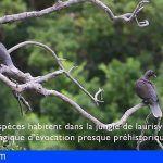 La Gomera comienza con la formación ornitológica para los profesionales del sector turístico