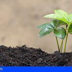 Canarias. Nueva línea de ayuda a la producción ecológica que dará cabida a todos los agricultores y ganaderos