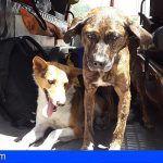 Los bomberos rescatan a dos perros y un gato en un incendio en una vivienda en Santa Cruz